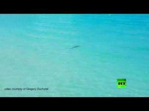 سمكة قرش عملاقة ترعب رواد شاطئ إسباني