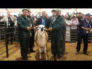 شاهد الصردي الذي فاز المدالية الذهبية بالمعرض الدولي للفلاحة بمكناس