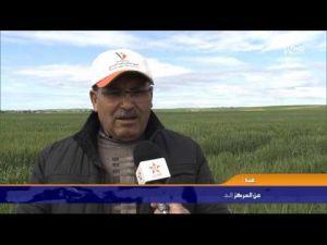 معالجة المحاصيل الفلاحية من الطفيليات بعمالة مكناس