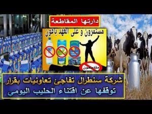 شركة سنطرال تفاجئ تعاونيات بالفقيه بن صالح بقرار توقفها عن اقتناء الحليب اليومي