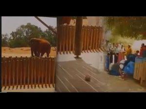 ياربي السلامة.. الصدمة فيل قتل طفلة عمرها 7 سنوات في حديقة الحيوانات بالرباط