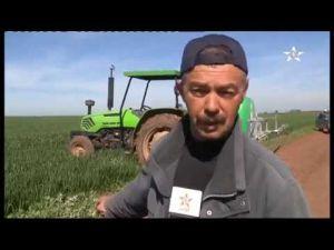 انتعاش مهم بحقول الحبوب بعين جمعة باقليم مكناس