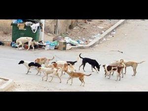 عملية قتل الكلاب الضالة تثير استياء ساكنة ويسلان