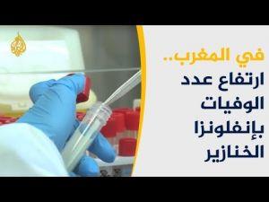 ارتفاع عدد الوفيات بإنفلونزا الخنازير بالمغرب