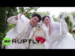 حيوان الألبكة يحمل الخواتم في حفلات الزفاف باليابان