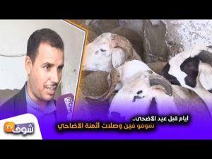 أيام قبل عيد الأضحى..شوفو فين وصلات أثمنة الأضاحي