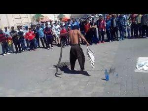ثعبان يهاجم مروضه في حلقية بساحة لهديم في مكناس